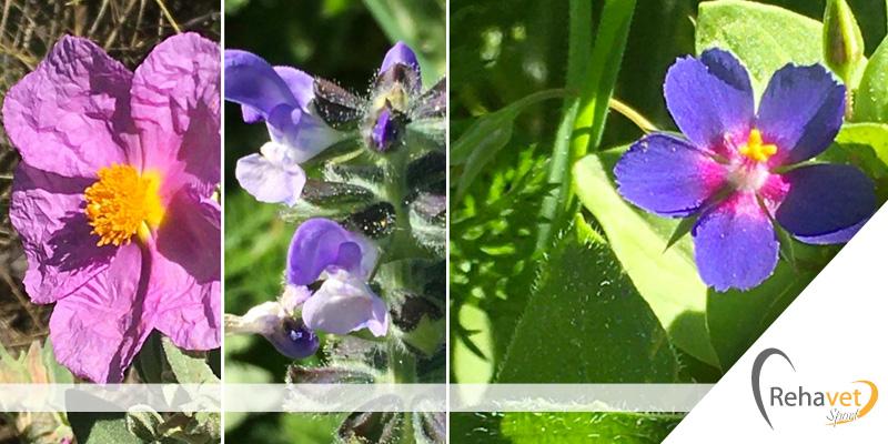 flores_del_campo